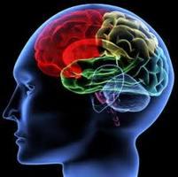 news1_brain_